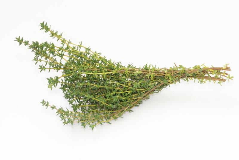 Une branche de thym frais photo libre de droits
