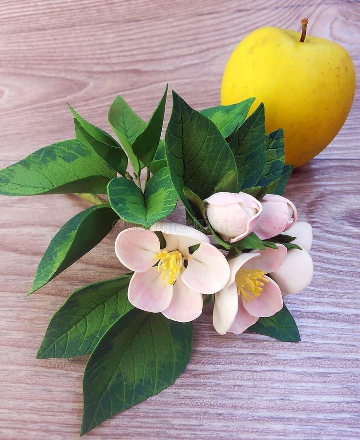 Une branche des fleurs d'Apple et de l'Apple photo libre de droits