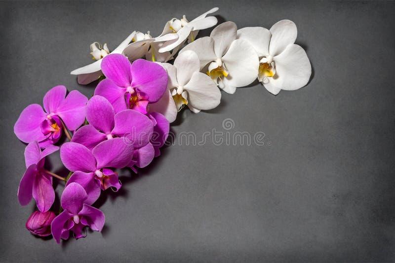 Une branche des orchidées blanches et roses Carte de voeux Belle composition photos libres de droits