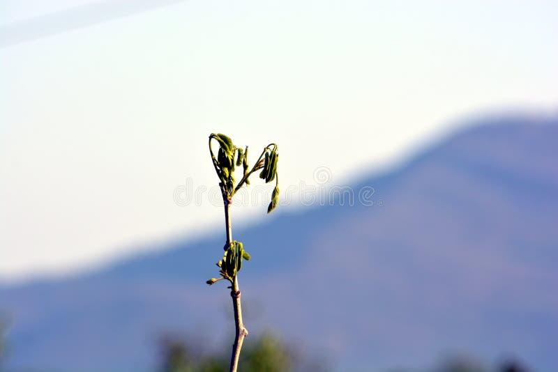 Une branche du ` s de plante verte photo stock