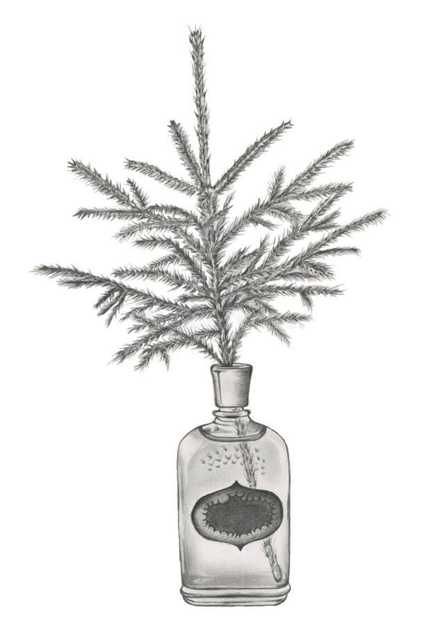 Une branche impeccable dans la bouteille de parfum démodée photos stock
