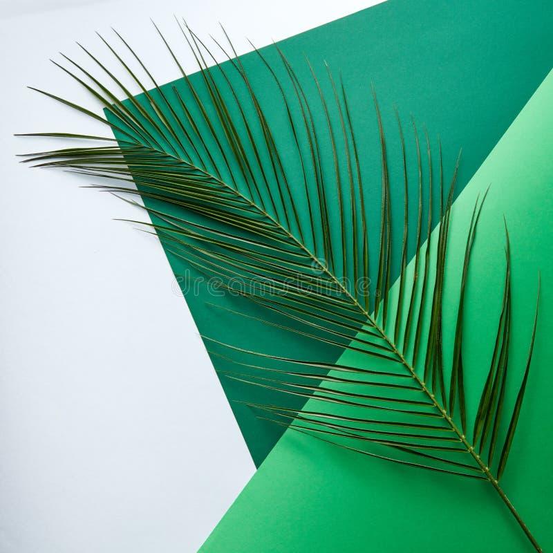 Une branche naturelle de paume sur un double carton vert clair et vert-foncé sur un fond gris avec l'espace pour le texte photo stock