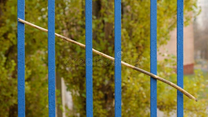 Une branche sèche d'un arbre collant dans une grille d'une barrière photos libres de droits