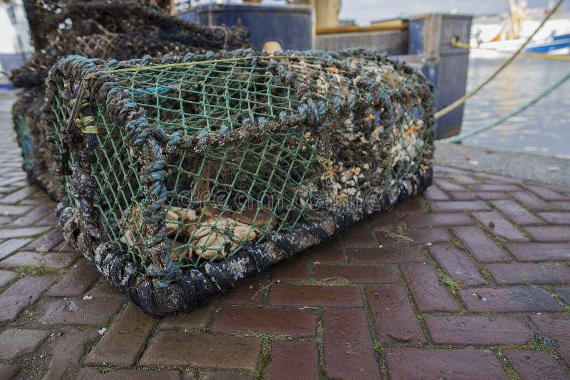 Une cage de pêche de crabe a rempli de gauche au-dessus de crabe sur les docks de port images stock