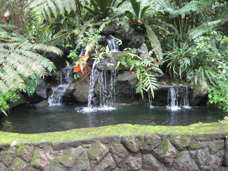 Une caractéristique de l'eau aux jardins botaniques de Makiling, Philippines photo stock