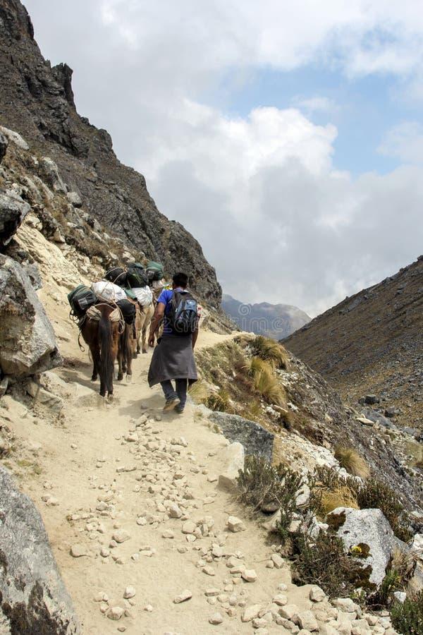 Une caravane d'âne dans les Andes près de Cuzco au Pérou photo stock