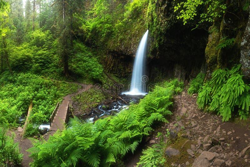 Une cascade avec un pont en cascades profondes de forêt est située en gorge du fleuve Columbia au bel arrière-plan de cascade de  photos libres de droits