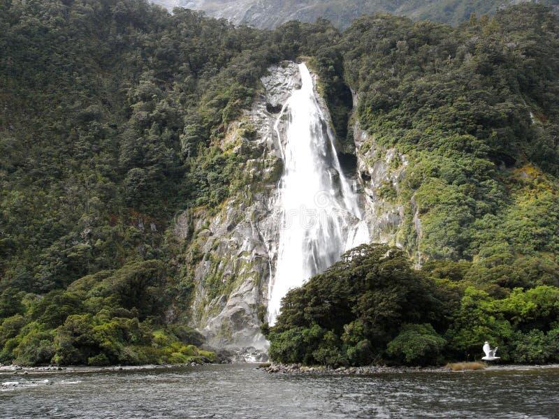 Une cascade chez Milford Sound image libre de droits