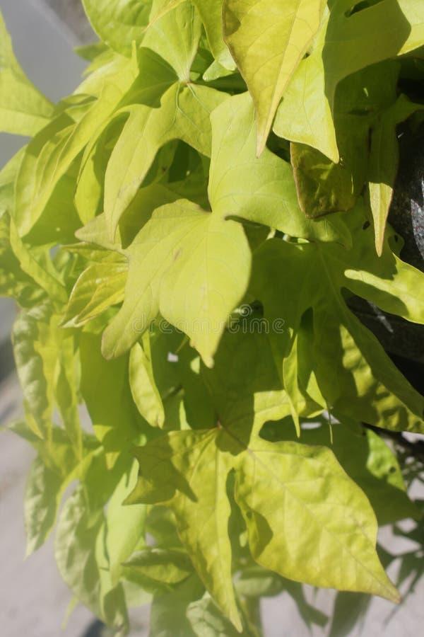 Une cascade de détente de feuilles jaunes photo libre de droits