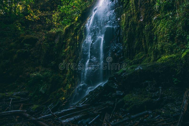 Une cascade magique en Orégon images libres de droits