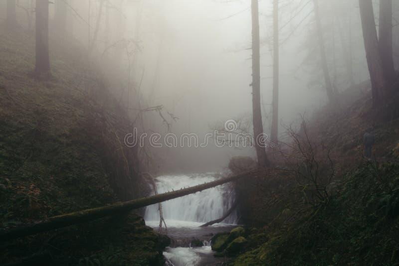 Une cascade minuscule dans une forêt foncée rampante images libres de droits