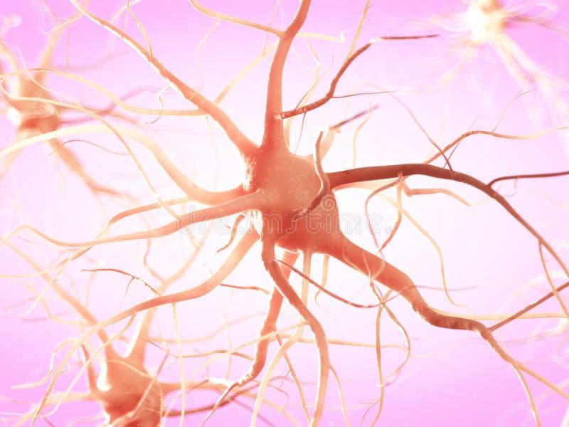 Une cellule nerveuse illustration libre de droits