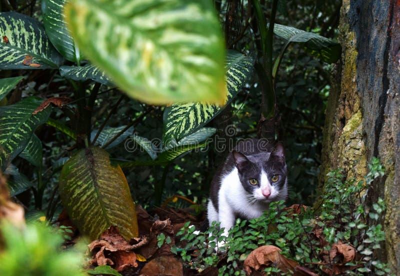 Une chasse de chat dans la forêt photo stock