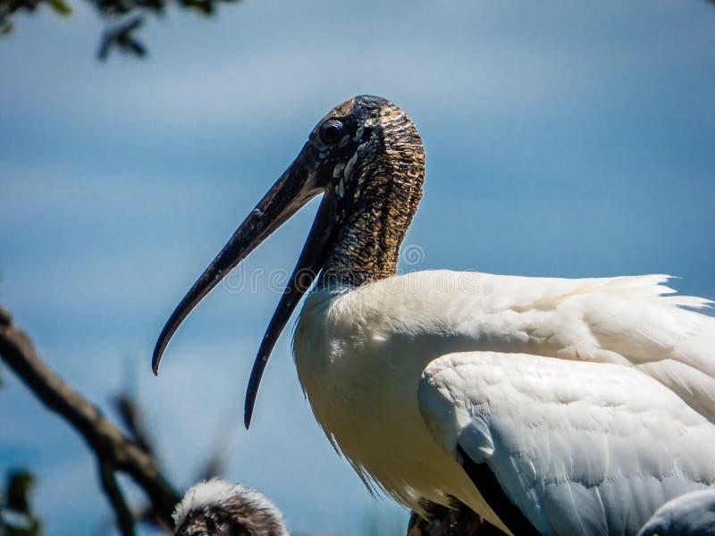 Une cigogne de mère sur le nid photographie stock