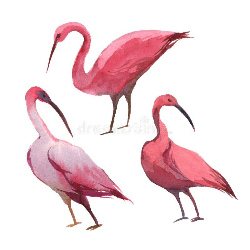 Une cigogne ou une spatule rose d'isolement sur le fond blanc illustration de vecteur