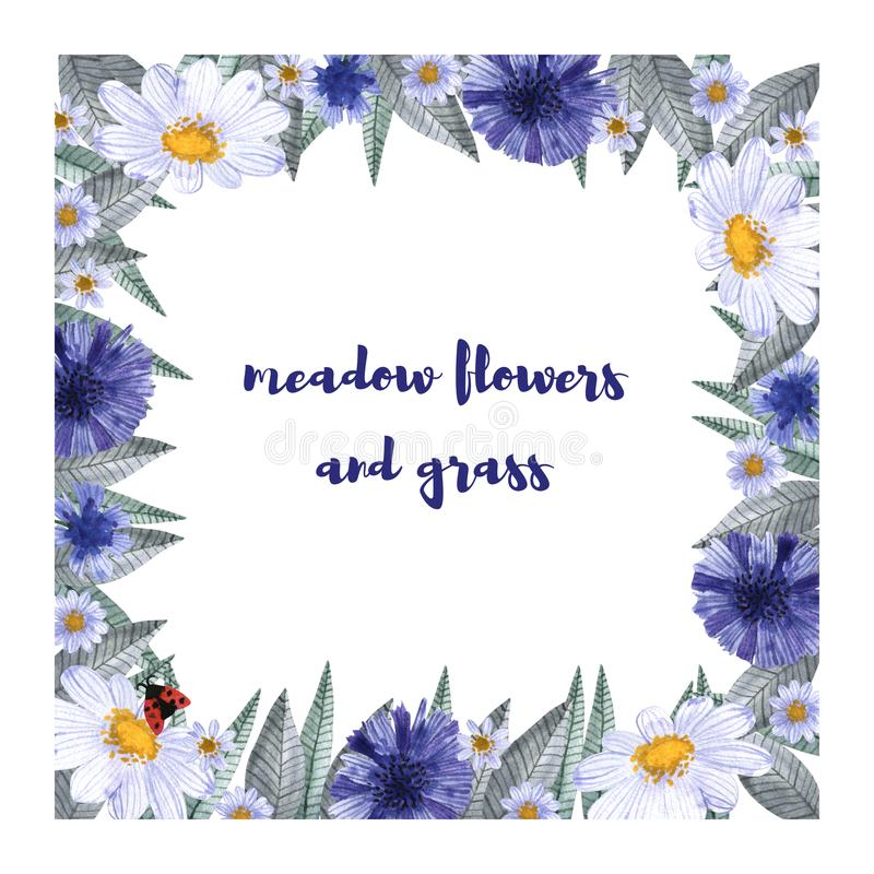 Une collection d'herbes et de fleurs Camomille, plantain, bleuets watercolor illustration de vecteur