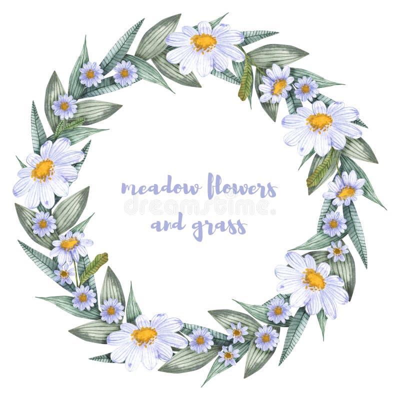 Une collection d'herbes et de fleurs Camomille, plantain, bleuets watercolor illustration libre de droits