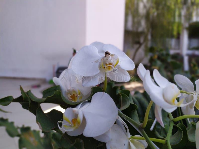 Une collection d'orchidées blanches photos stock