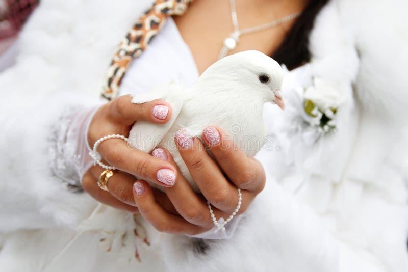 Une colombe dans des ses mains photographie stock libre de droits