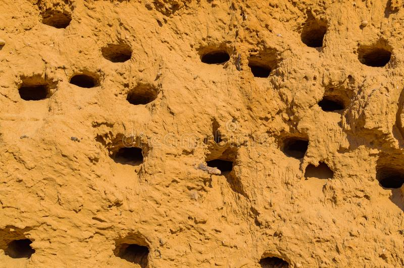 Une colonie des trous d'oiseau dans une falaise de gr?s Endroit d'embo?tement d'oiseau photo libre de droits
