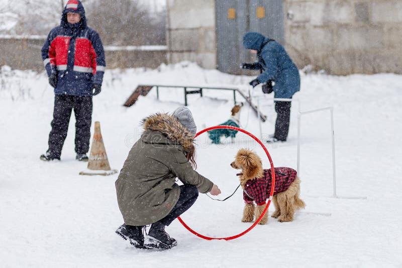 une concurrence pour des chiens, l'amusement commence en hiver, éditorial images stock