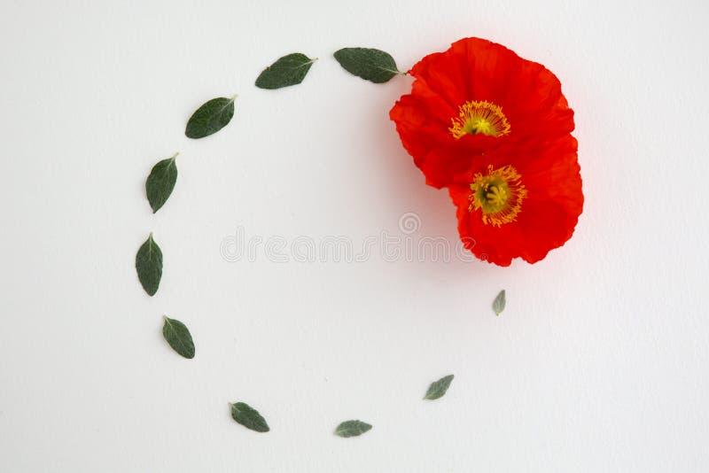 Une configuration plate d'une guirlande des feuilles et des pavots rouges sur un fond blanc photos stock