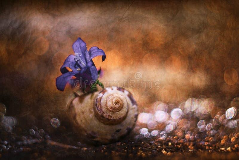Une coquille et une fleur sur la table photo libre de droits