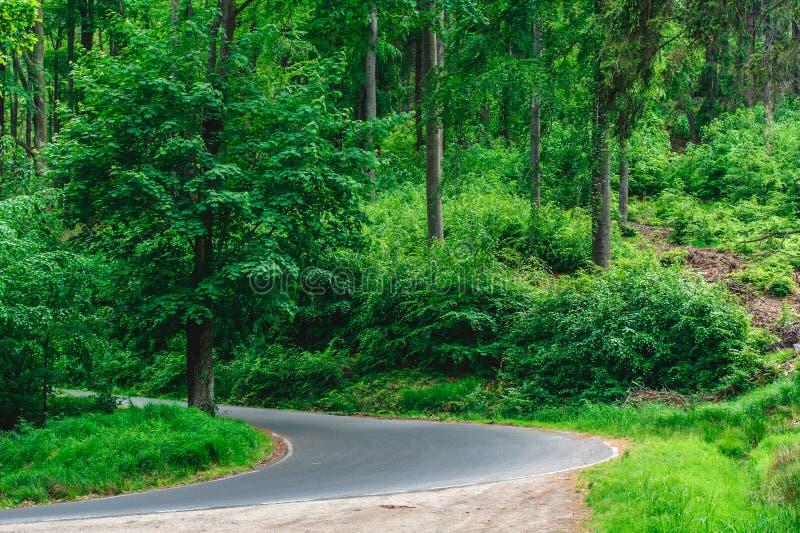 Une courbure sur la route dans la forêt images libres de droits