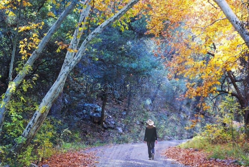 Une cow-girl marche Forest Road en automne photo stock