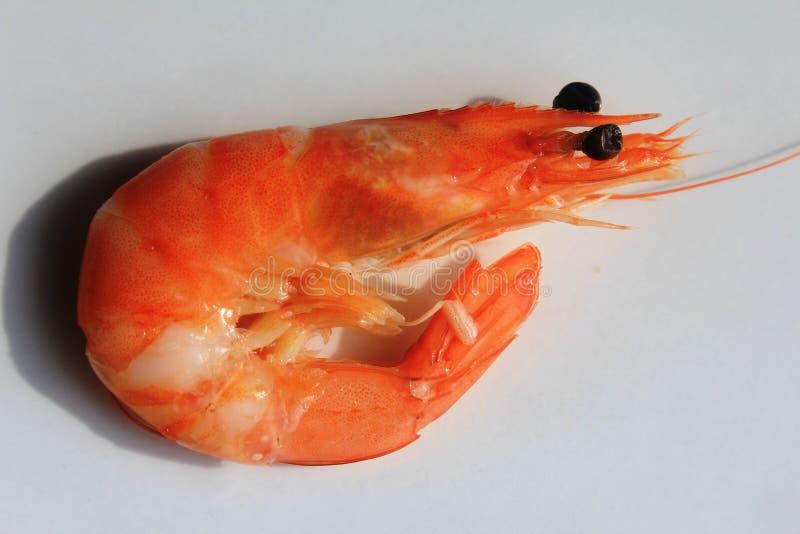 Une crevette - petite crevette rouge photo stock