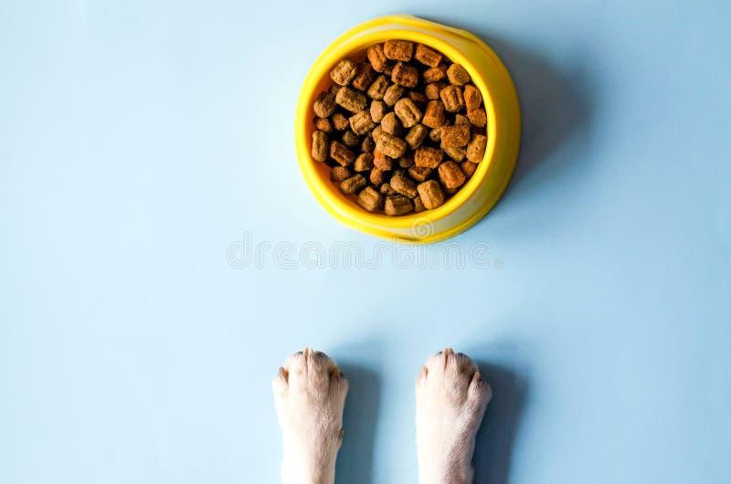 Une cuvette de couleur jaune avec la nourriture et les pattes avec un visage de chien image stock