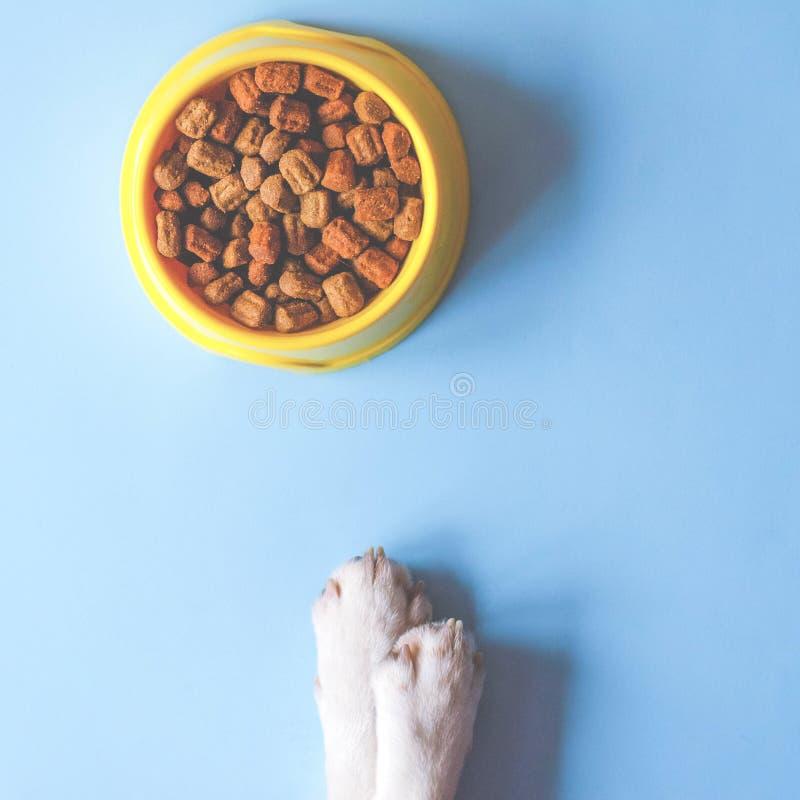 Une cuvette de couleur jaune avec la nourriture et les pattes avec un visage de chien photographie stock libre de droits