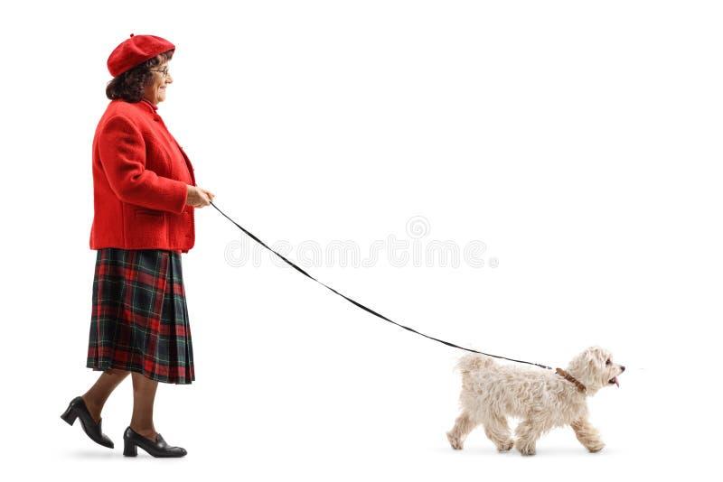 Une dame plus âgée marchant un petit chien blanc image libre de droits