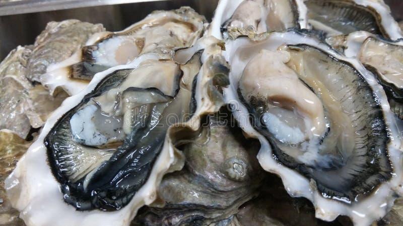 Une demi-douzaine d'huîtres photos stock