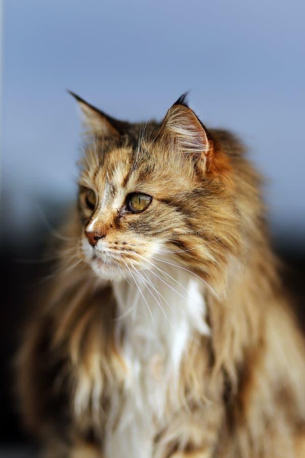 Une des images de chat les plus belles photo stock