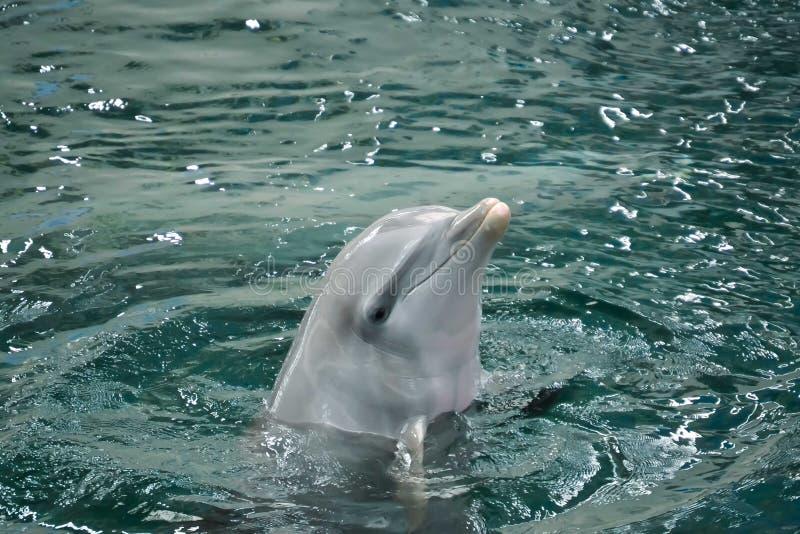 Une exposition avec les dauphins photos libres de droits