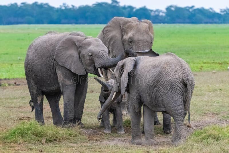 Une famille des éléphants, avec un bébé photographie stock