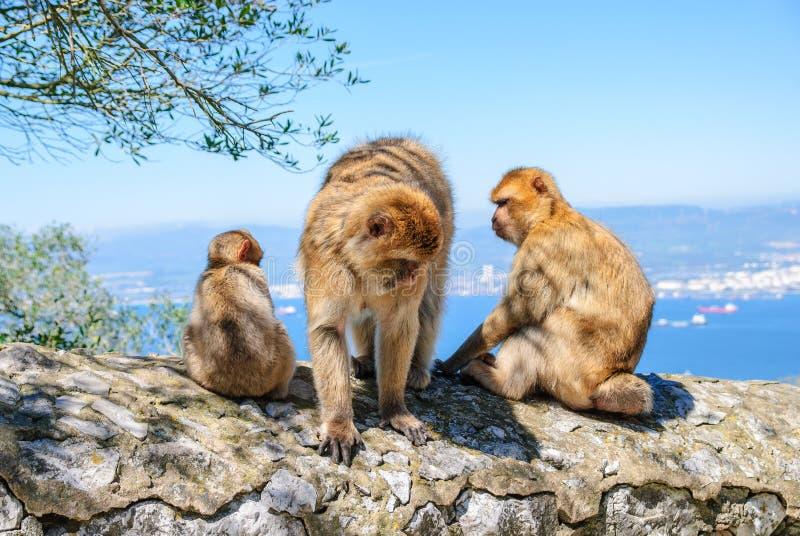 Une famille des singes photos stock