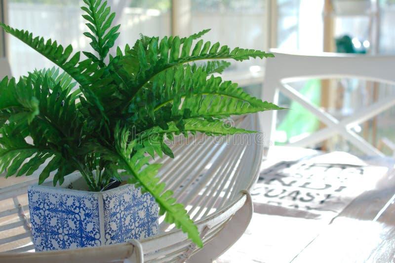 Une fausse fougère verte dans un pot bleu et blanc se repose dans un panier de canne sur une table de salle à manger en bois image libre de droits