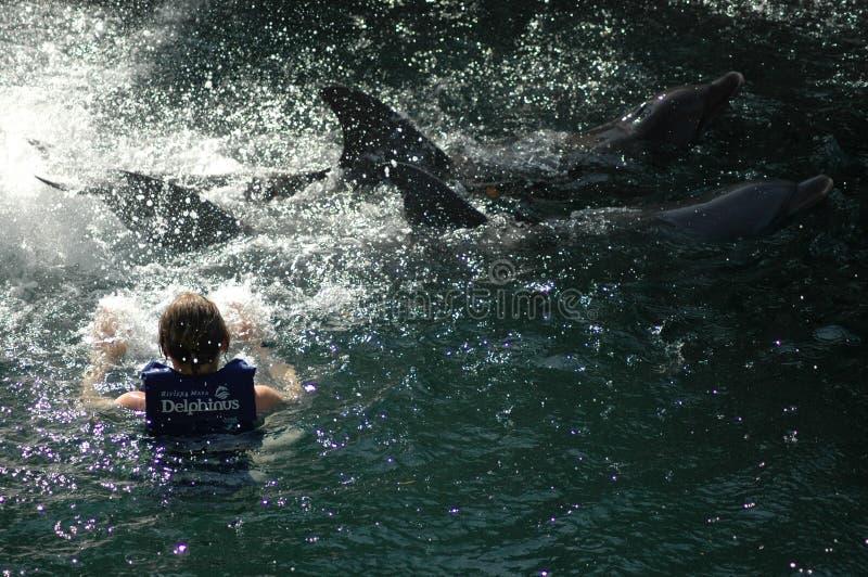 Une femme avec deux dauphins au Mexique image libre de droits