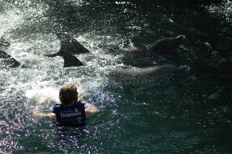 Une femme avec deux dauphins au Mexique photographie stock