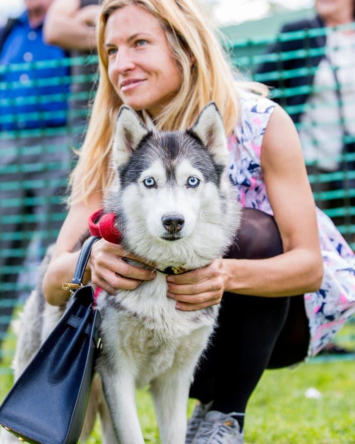 Une femme avec son chien de traîneau en parc à une exposition canine photo stock