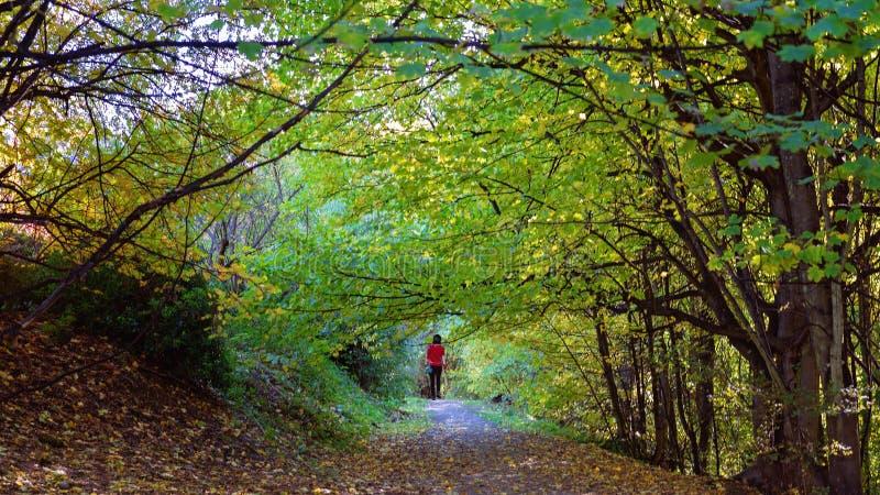 Une femme dans une veste rouge marche le long d'un chemin couvert en Autumn Leaves images stock