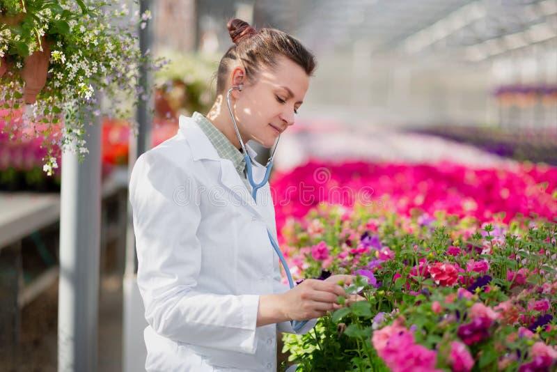Une femme de biologiste de scientifique dans un manteau blanc s'inquiète et examine les fleurs en serre chaude image stock