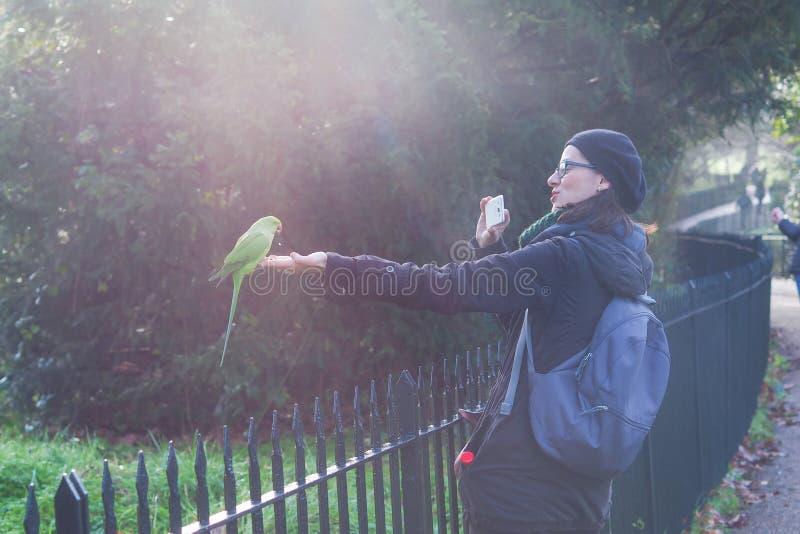 Une femme faisant la photo d'une perruche verte chez Hyde Park à Londres un jour ensoleillé photo stock