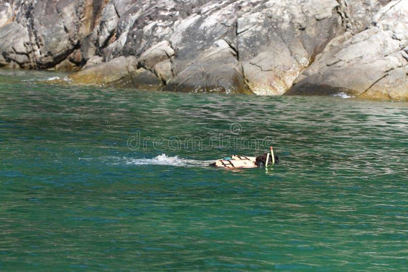 Une femme naviguant au schnorchel dans l'eau chaude de turquoise de la Thaïlande, fond, papier peint, destination de voyage images libres de droits