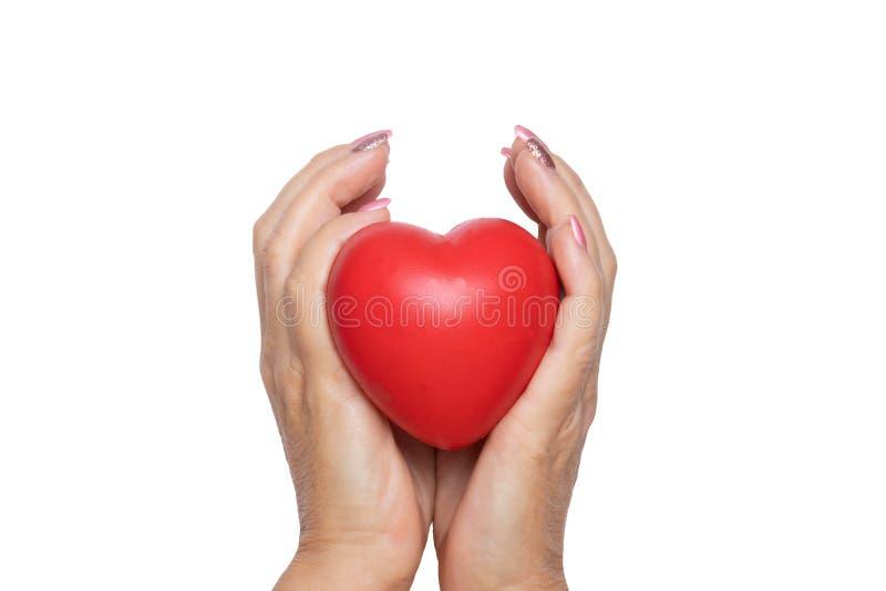 Une femme tient un coeur symbolique rouge dans des ses paumes Plan rapproché d'isolement sur un fond blanc Concept des soins, de  photographie stock