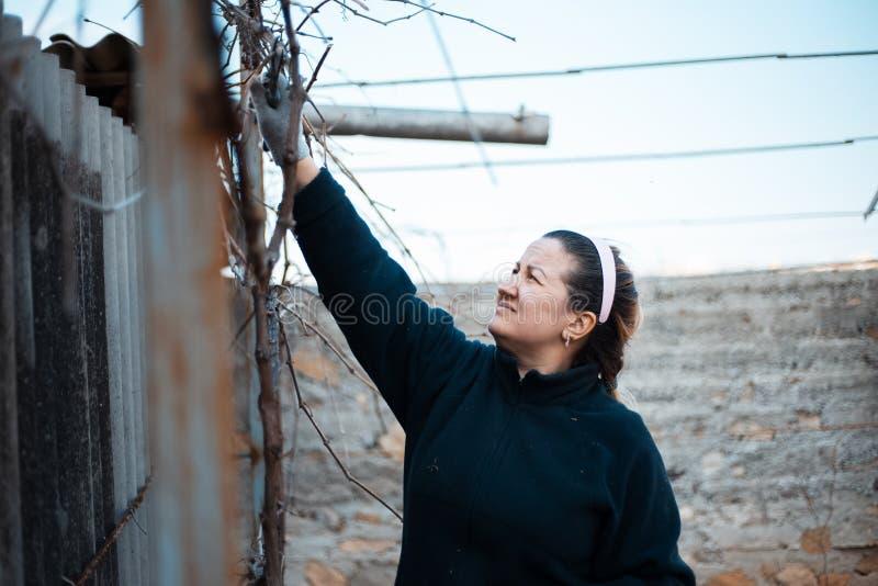 Une femme travaillant dur dans le vignoble images libres de droits