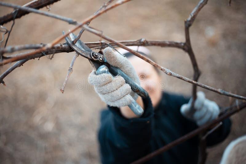 Une femme travaillant dur dans le vignoble de village photographie stock
