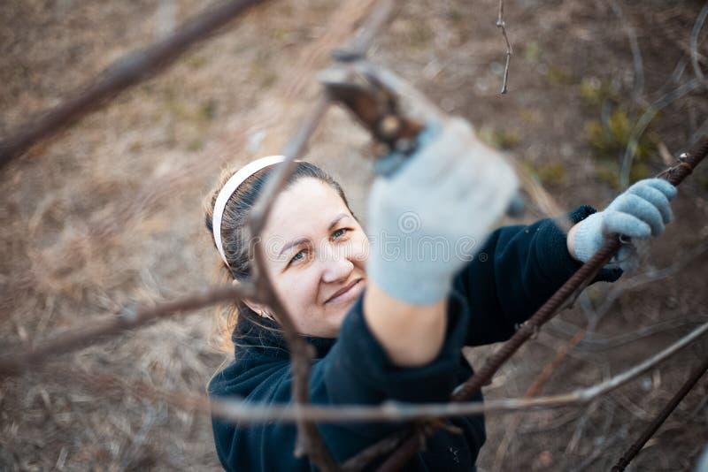 Une femme travaillant dur dans le vignoble de village images libres de droits